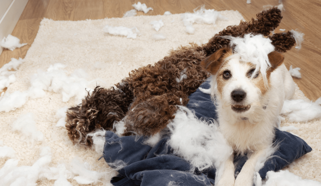 Don't Leave Me This Way – Separation Anxiety Training